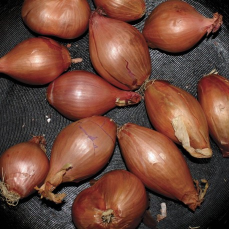 Ty Segall - Fried Shallots